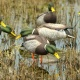 duck group1 80x80 - Lesser 6 Pack